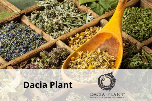 dacia plant preview