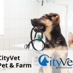 city vet client senior software