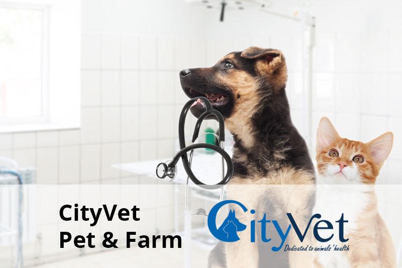 city vet client senior software