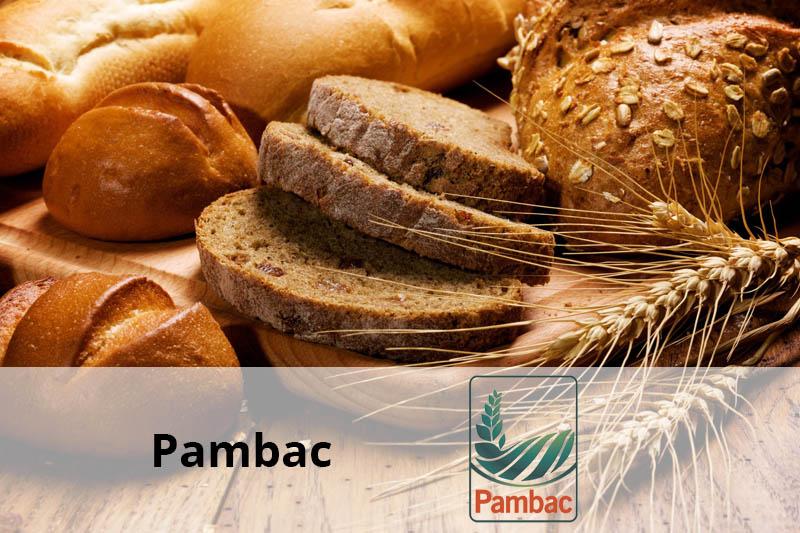pambac client senior software